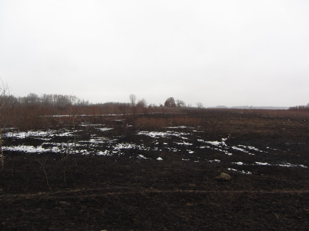 Faville Prairie prior to restoration Jan 2018